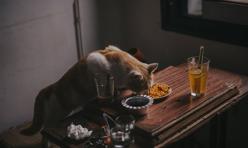 Dog Health Symptoms That You Must Address